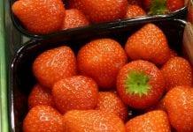 Truskawki –  temat nr 1 na targach Macfrut