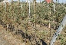 Susza rolnicza w 15 województwach i we wszystkich uprawach