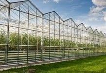 Rosja: zbiory warzyw szklarniowych