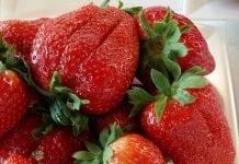 Ogromny wzrost produkcji truskawek. Co jest powodem?