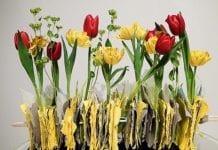 Tulipany w Wilanowie