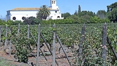 Winorośl w Chile