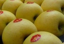 Nowa marka żółtych jabłek już w sprzedaży