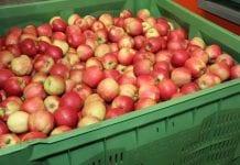 Stan zapasów jabłek we Włoszech na dzień 1 marca