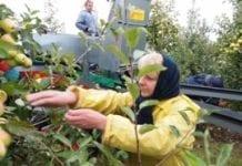 W Polsce brakuje chętnych do pracy przy zbiorach