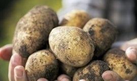 Fit ziemniaki dla aktywnych