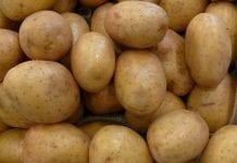 Ceny warzyw na rynkach hurtowych 22 marca