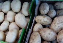 Sierpniowe ceny ziemniaków