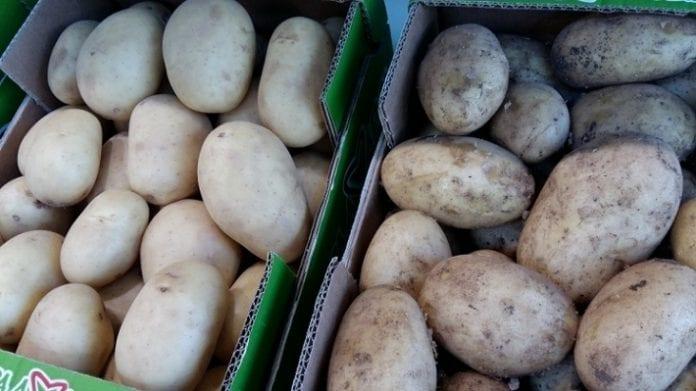 Różne odmiany ziemniaków