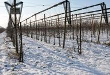 Włochy pod śniegiem. Są straty spowodowane niespodziewanym mrozem