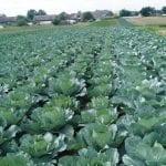 Dochód z pracy w gospodarstwie rolnym
