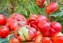 Spółdzielnia oferuje wizualnie nieatrakcyjne owoce