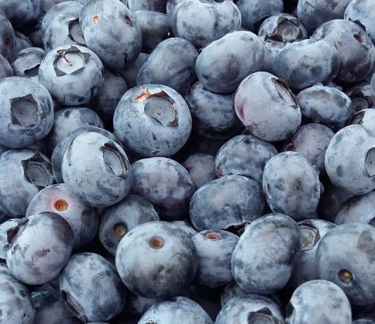 Prognoza zbiorów owoców wg Związku Sadowników RP