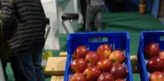Odmiany jabłek parchoodpornych – kolekcja