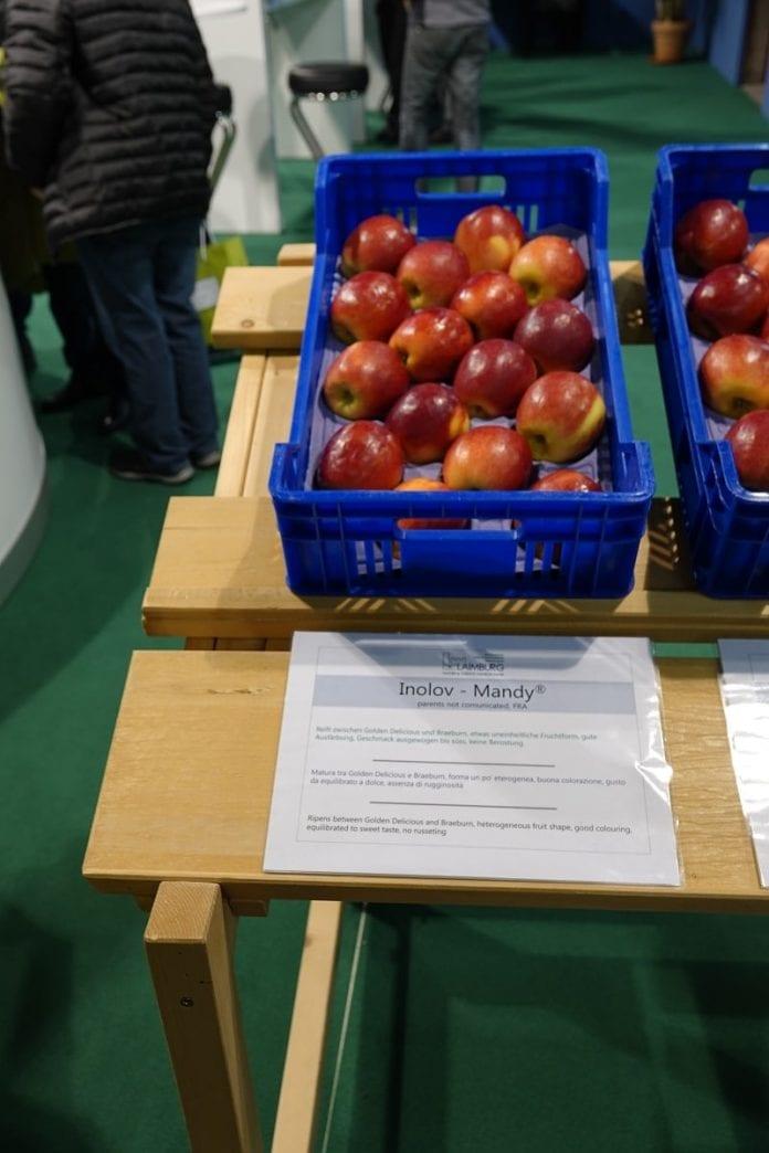 Inolov - Mandy - parchoodporna odmiana jabłek