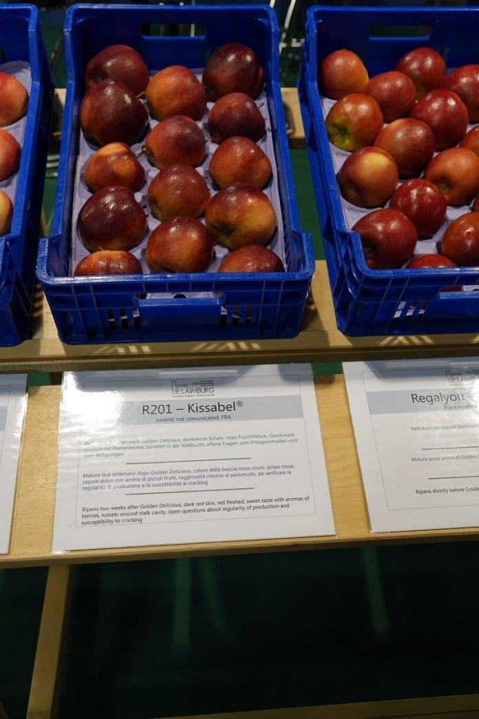 R201 - Kissabel - parchoodporna odmiana jabłek