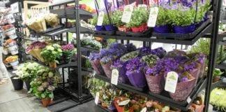 Flower Expo Polska: rośliny doniczkowe bardziej widoczne