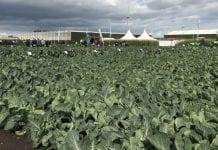 Warzywnicze Międzynarodowe Dni Otwarte w Holandii