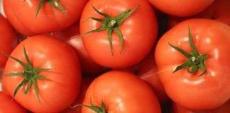 Szkolenie pomidorowo-ogórkowe w Tłokini Kościelnej