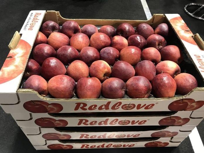 RedLove odmiana o czerwonym miąższu
