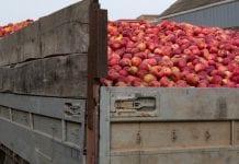 Przeładowane ciężarówki z jabłkami; GITD nakłada kary