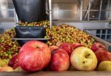 Jabłka przemysłowe w Rosji coraz tańsze