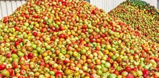 Eskimos zakontraktował 450 tys. ton jabłek