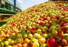 Eskimos: będziemy zachęcać sadowników do opóźniania dostaw jabłek