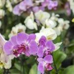 Nowe prawo zdrowia roślin dla ogrodników amatorów