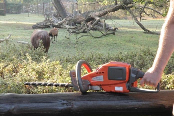 Profesjonalne maszyny akumulatorowe Husqvarna dbają o zieleń i komfort zwierząt w ZOO Wrocław