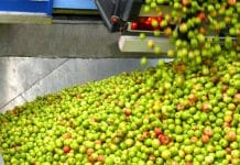 Eskimos zakontraktował 230 tys. ton jabłek