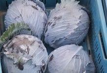 Kapusta włoska i czerwona - ceny warzyw w Broniaszach grudzień 2018