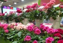 Najważniejsze targi w branży roślin ozdobnych