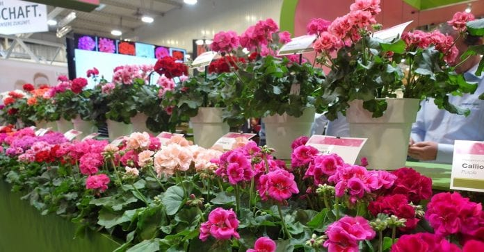 Rośliny Ozdobne Targi Essen 2019
