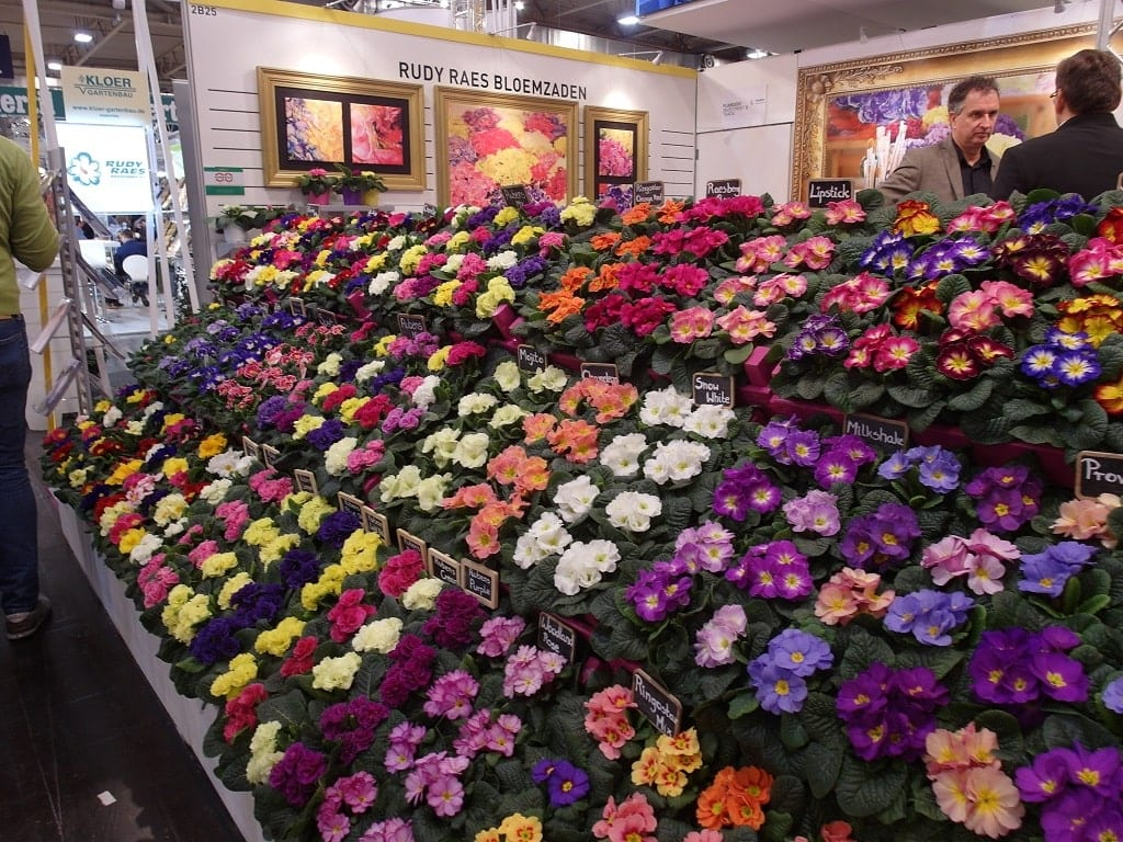 Na targach w Essen nie brakuje roślin kwitnących wiosną - 1