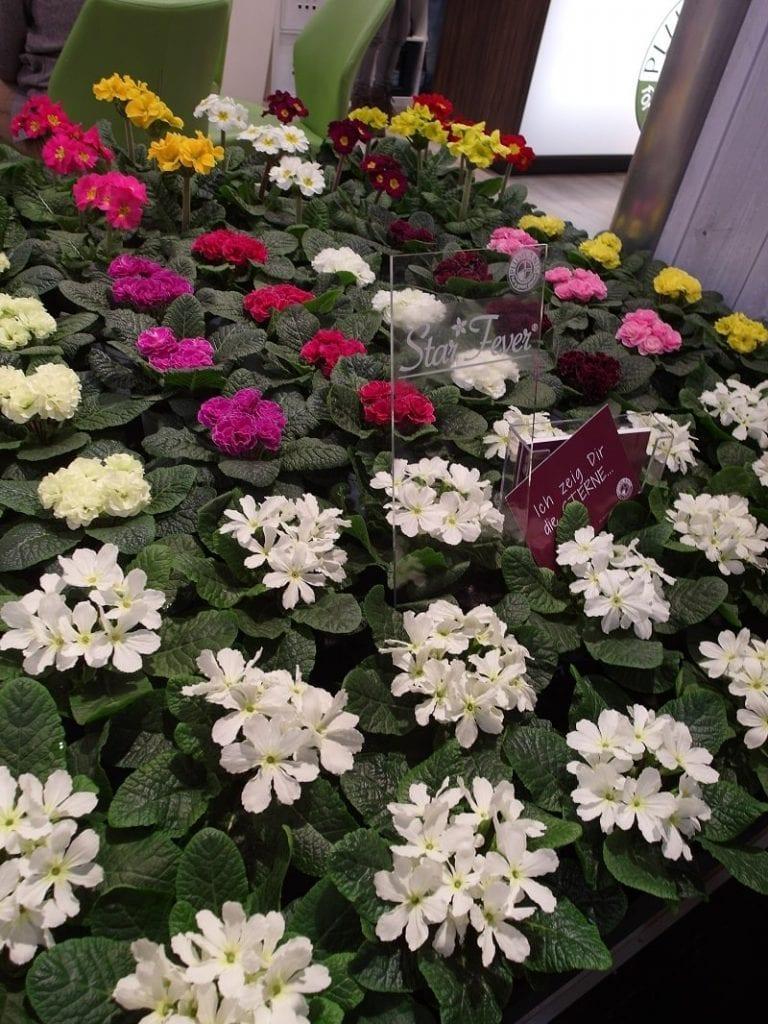 Na targach w Essen nie brakuje roślin kwitnących wiosną - 4