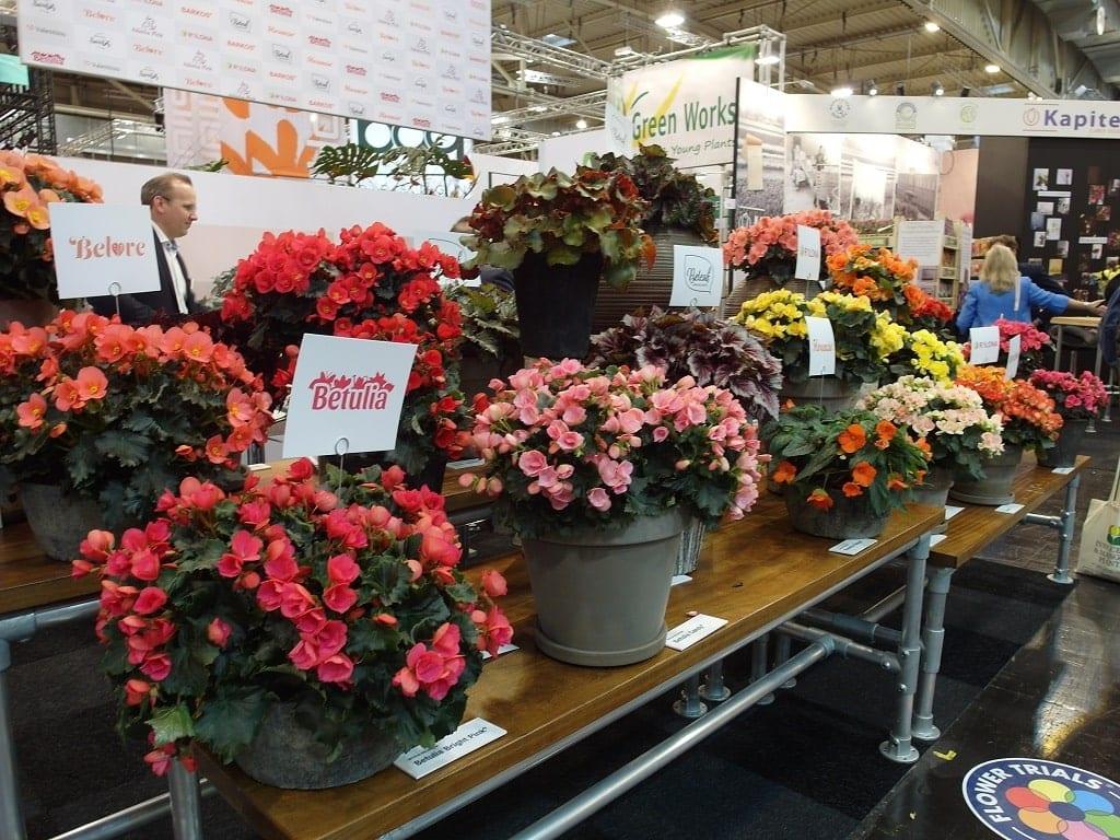 W ofercie wystawców można znaleźć kwitnące kwiaty doniczkowe
