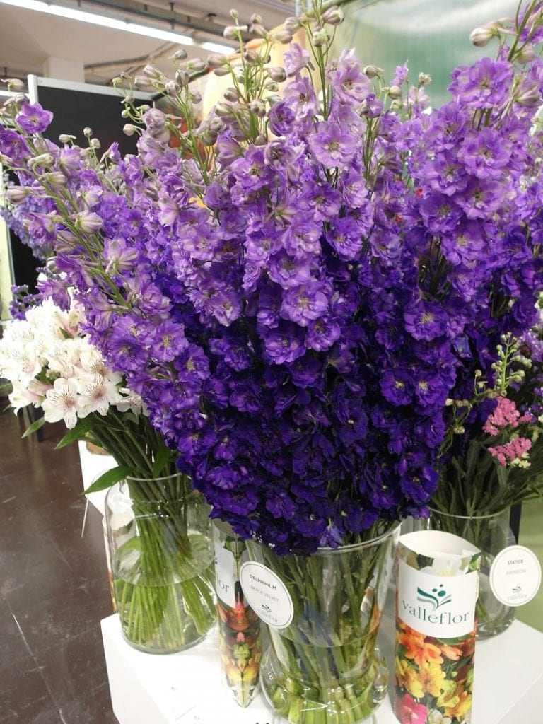 Kwiaty cięte można było zobaczyć na kilku stoiskach