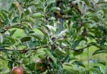 Fungicydy w sadonictwie