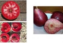 Czerwony miaższ jabłka grusze brzoskwinie