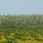 Dotacje dla ukraińskich sadowników