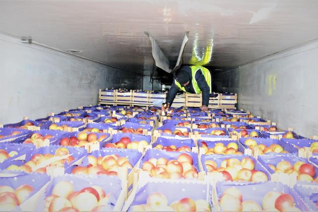 Afgańczycy w transporcie owoców do Polski