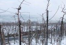 Jabłonie – zrozumieć zachowanie drzew