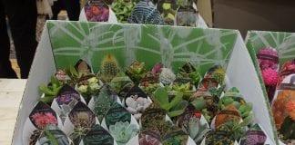 Rośliny doniczkowe na fali