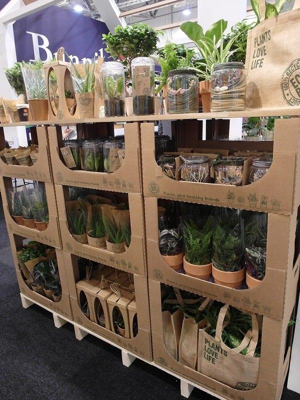 Rośliny doniczkowe sprzedawane w przyjaznych środowisku opakowaniach