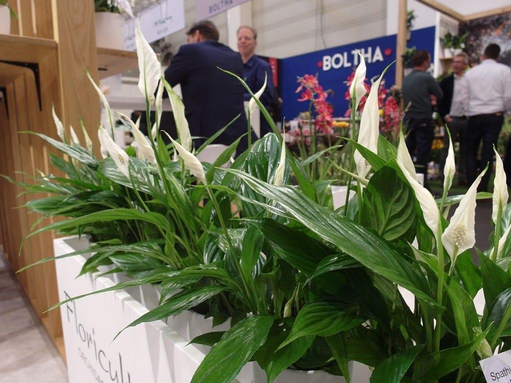 Firma Floricultura włączyła do swojego programu hodowlanego skrzydłokwiat