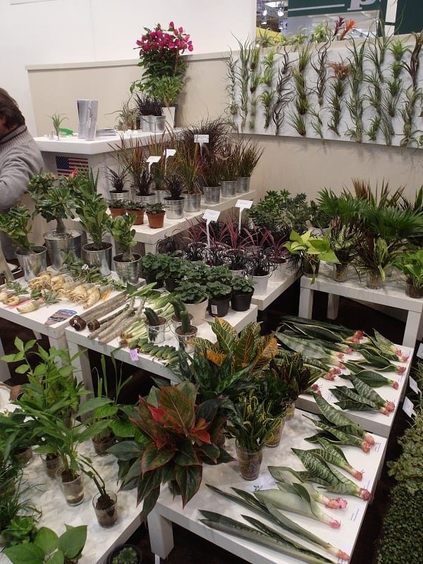 Z ofertą materiału wyjściowego roślin doniczkowych do Essen przyjechała firma Fleurizon International