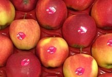 Polskie jabłka - czy dotrą do Indii