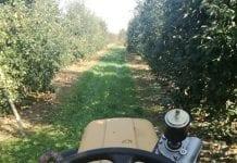 Zuchwale kradzieże z gospodarstw sadowniczych…