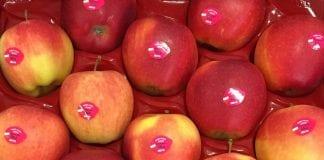 Ukraińskie jabłka wypierają polskie z Bliskiego Wschodu